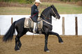 Black friesian horse man on at mexican fieasta in arena doing with ornate spanish saddle Stock Photography