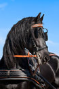 Black Friesian horse in sky Royalty Free Stock Photos