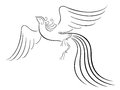 Black graceful firebird contour isolated over white hand drawing vector illustration Royalty Free Stock Image