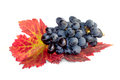 Black grapes and autumn leaves leayes macro Stock Photos