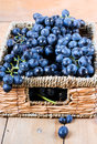 Black grapes in wicker basket Royalty Free Stock Image