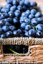 Black grapes in wicker basket Stock Photography