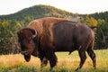 Black Hills Royalty Free Stock Photo