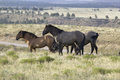 Black Hills Wild Horse Sanctuary, Royalty Free Stock Photography