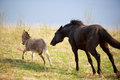 Black horse and gray donkey play with ball Royalty Free Stock Photos