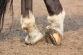 Black horse hoofs with horseshoe close up Royalty Free Stock Photos