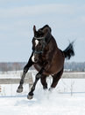 Black horse jumps in a snow Royalty Free Stock Photography