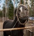 Black horse muzzle close up angle Stock Image
