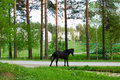 Black horse near country road. Stock Photography