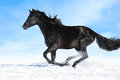 Black horse runs gallop on the sky background Stock Photography