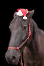 Black horse wearing santa hat Royalty Free Stock Photo