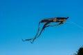 Black kite in the sky Royalty Free Stock Photo