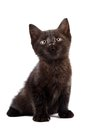 Black kitten Royalty Free Stock Photos