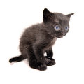 Black kitten isolated on white Stock Photo