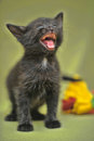 Black kitten mews Stock Images