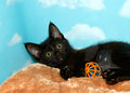 Black kitten playing with ball Royalty Free Stock Photo