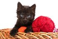 Black kitten playing with a red ball of yarn on white background Stock Photo