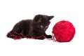 Black kitten playing with a red ball of yarn on white background Royalty Free Stock Photo