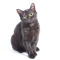Black kitten sitting and watching on the looker on white Royalty Free Stock Photo