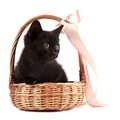 Black kitten in a wattled basket with a ribbon Stock Images