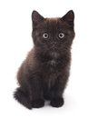 Black kitten. Royalty Free Stock Photo