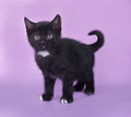 Black kitten with a white spot stands on lilac