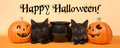 Black kittens happy halloween banner format Royalty Free Stock Photo