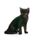 Black kitty Stock Photos