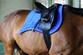 Black leather saddle with stirrups on back of a young stallion Royalty Free Stock Photo