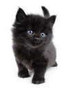 Black little kitten walking Royalty Free Stock Images
