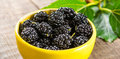 Black mulberry Royalty Free Stock Photo