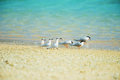 Black naped tern and roseate tern sterna spp this image was taken in okinawa prefecture japan Royalty Free Stock Photography