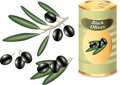 Black olives, black olive branch and bank Royalty Free Stock Photo