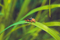 Black and orange beetle firefighter Royalty Free Stock Photo