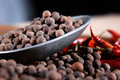 Black pepper in a spoon Royalty Free Stock Photography