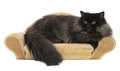 Black persian cat isolated on white Royalty Free Stock Photo