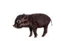 Black piggy isolated on white little the background Royalty Free Stock Photo