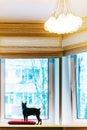 Black pincher dog near the window Royalty Free Stock Photo