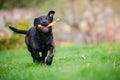 Black Puppy Dog On The Garden