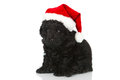 Black puppy with santas hat isolated on white Stock Image
