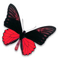 Black and red butterfly Royalty Free Stock Photo