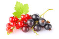 Black and red currant with green leaf Royalty Free Stock Image