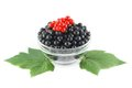 Black and Red currants in a glass bowl Stock Images