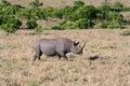 Black Rhino closer Royalty Free Stock Photo