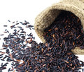 Black rice on a white background Royalty Free Stock Photo