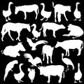 Black set silhouettes zoo animals collection on Royalty Free Stock Photography