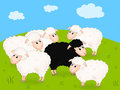 Black Sheep Royalty Free Stock Image