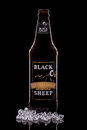 Black sheep ale hartlepool england january a bottle of golden fine pale isolated on pale brewed using time Stock Images