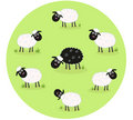Black sheep is lonely in the middle of white sheep Stock Images