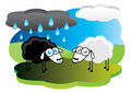 Black sheep with rain cloud Stock Image